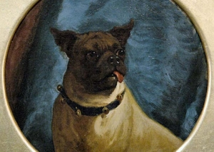 George Earl - Pug With A Freemason Collar